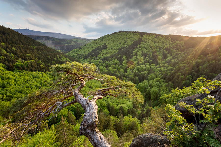 View over the Harz Mountains (© fotolia.com)